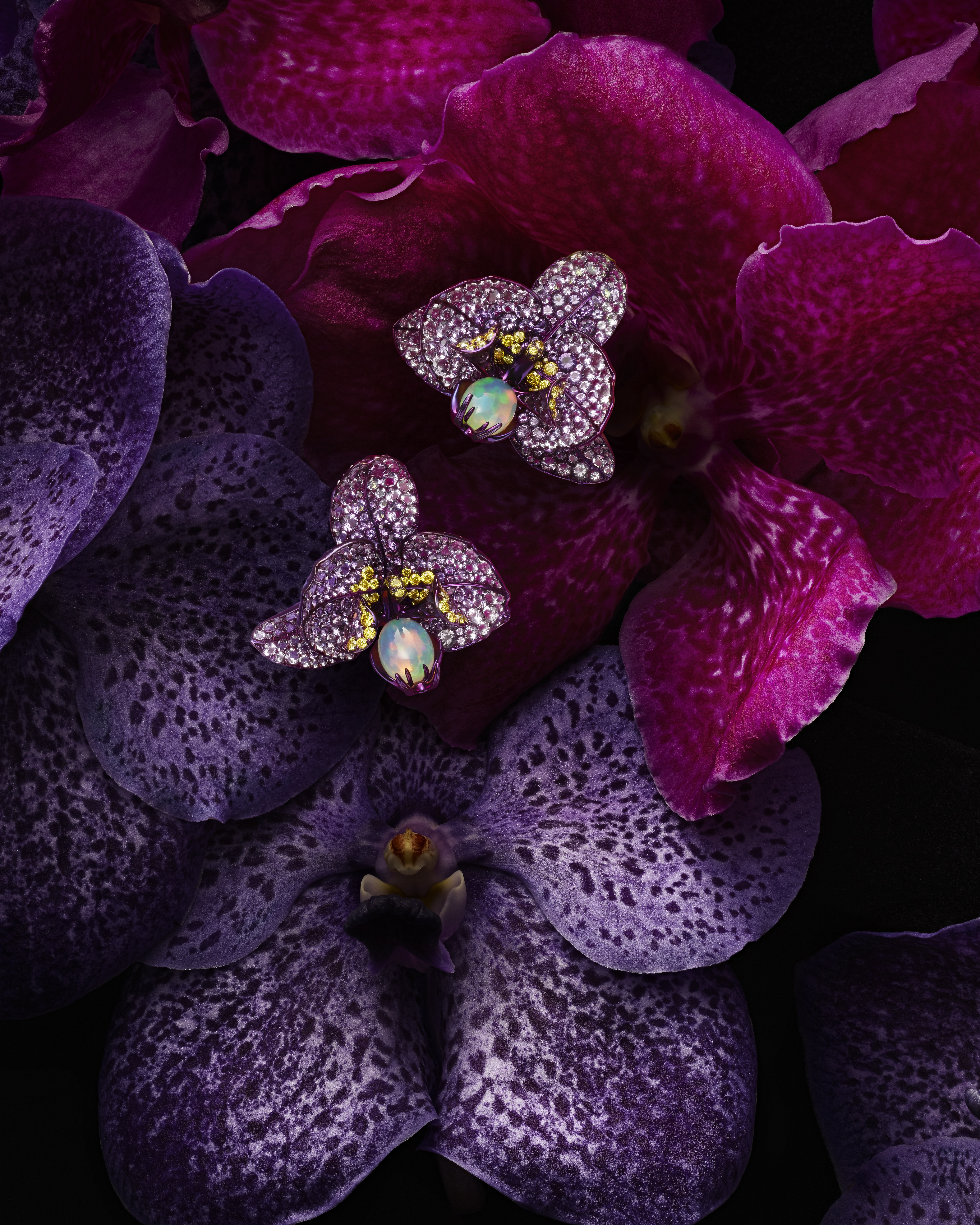 PRESS_ORCHID_2-rvb